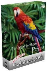 http://nyazmarket.com/images/mostanad/Parrot/Parrot.jpg
