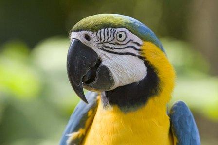 http://nyazmarket.com/images/mostanad/Parrot/Parrot3.jpg