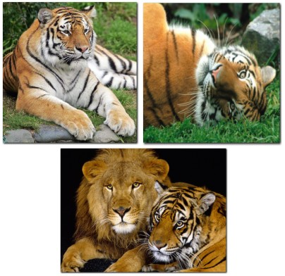 http://nyazmarket.com/images/mostanad/Tigers/Panthera-Tigris1.jpg